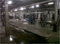 Inside the Karantina Slaughterhouse5
