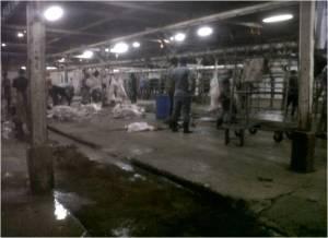 Inside the Karantina Slaughterhouse5