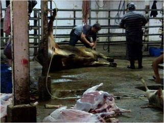 Inside the Karantina Slaughterhouse3