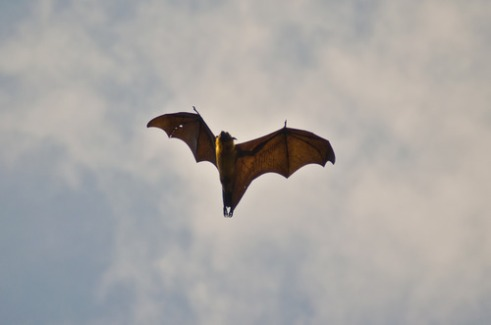 Beautiful bat taken by myself