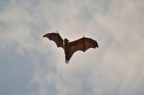 Beautiful bat taken by myself