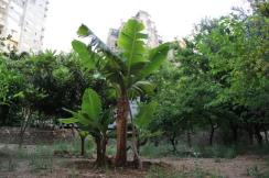 The Orchard – To be demolished (credits : Habib Battah/The Civil Coalition)